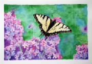 hayjo2013_eastern_yellow_swallowtail_10x7.JPG
